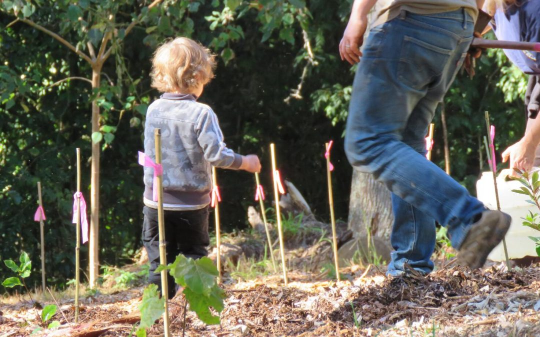 Planting Forests, One Tree at a Time